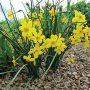 Pestré cibuloviny a jemné okrasné traviny mohou ve výsadbách vytvořit nerozlučnou dvojici.