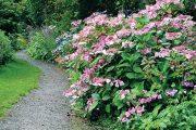 Na rozhraní mezi létem a podzimem kvetou na zahradě četné hortenzie, kterým se zde velice daří.