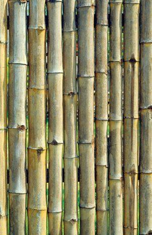 Šikovné clony dokážou hotová kouzla. Přírodním a asijským zahradám padnou na míru bambusové a rákosové rohože.
