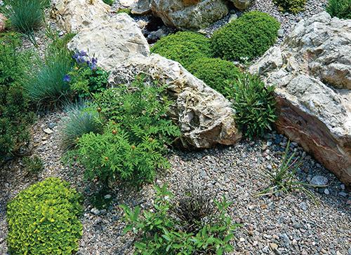 Kámen je pro rostliny nejen krásným, ale i praktickým doplňkem, který absorbuje teplo.