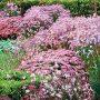 I když se na podzim uklízí celá zahrada, na trvalkové záhony můžete klidně zapomenout.