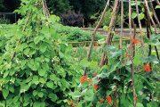 Každý zahrádkář uvítá dobře míněné rady zahradního architekta. zajímavé jsou i jeho postřehy týKající se chyb, Kterých se běžně dopouštíme.