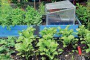 Vyvýšené záhony výrazně zjednoduší péči o vysazené rostliny.