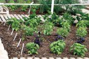 Spojení užitku a krásy je lehce dosažitelné – užitková zahrada tak může být i hezká a okrasná zahrada zároveň i užitková.