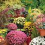 Na balkony a terasy vybírejte spíše kompaktní rostliny.