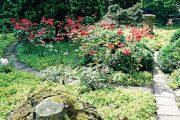 V rozáriu najdete různé odrůdy růží. Kulisu jim vytvářejí jehličnany ze všech koutů světa.
