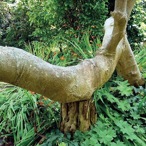 Arboretum se pyšní známými i téměř neznámými druhy dřevin, z nichž některé mají bizardní vzhled.