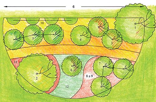 Rostliny použité v ukázkové výsadbě