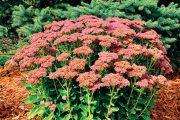 Mulčovací kůra plní v zahradě také dekorativní funkci.