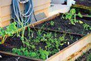 Okrasnou zahrádku vytvoříte i na několika metrech čtverečních, zeleninová by ale měla být větší.