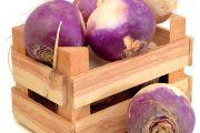 Tam, kde se daří bramborám, se bude dařit i tuřínu.