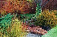 Začínáme prožívat spíše zimy anglického rázu, při nichž vypadají zahrady až do Vánoc stále podzimně. Podívejme se tedy, jak to dělají jinde, aby i pohled na české zahrady byl v zimě hezký a vpravdě nevšední.