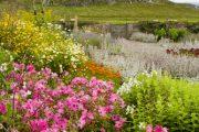 Jekyll navrhla trvalkové záhony pro celou řadu zahrad u šlechtických sídel.
