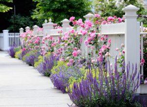Klid a harmonii vnesou do výsadeb květy rostlin ve studených tónech.
