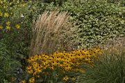 Teplé barva vnáší do zahrady dobrou náladu.
