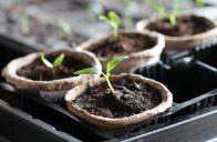 Výsevní substráty umožňují vzcházení osiva i pěstování již přesazené sadby.