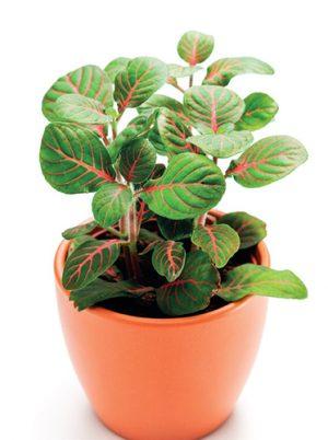 Nedostatek světla je jednou z nejčastějších příčin oslabení rostlin.