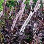 Některé rostliny v sobě spojují krásu s užitkem dohromady.