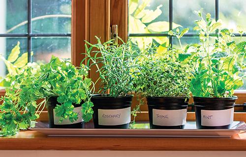 K pěstování bylinek vyberte správně orientované okno.