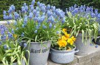 Pro tvorbu zajímavého detailu třeba na terase se zvláště hodí drobné cibuloviny.
