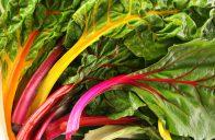 Mangold seženete v mnoha barevných odrůdách.