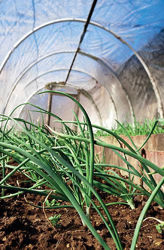 Fóliovník není plně zaměnitelný se skleníkem, slouží především k ochraně rostlin.