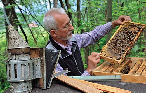 Zdravé včelstvo je snem každého včelaře.