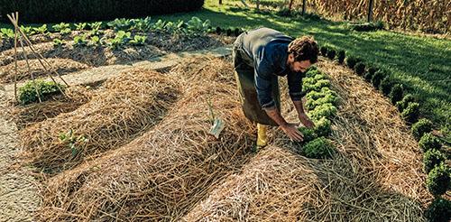 Sláma, která plní funkci mulče, dodá do půdy svým postupným rozkladem organickou hmotu.