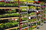 Pestrý sortiment letniček objevíte především u specializovaných pěstitelů.