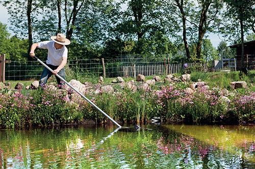 Na jaře je nutné z jezírka odstranit listí a odumřelé části rostlin.