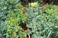 Smíšená výsadba využívá vzájemné vztahy mezi rostlinami.