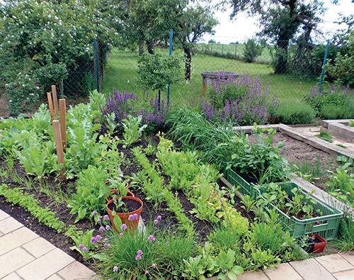 Na štěrkový záhon navazuje užitková část zahrady se zeleninou, angrešty a podsadbou šalvěje lékařské.
