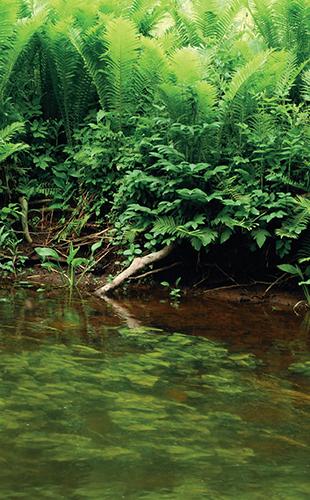 Ve vodě s vysokým obsahem živin se množí sinice a řasy.
