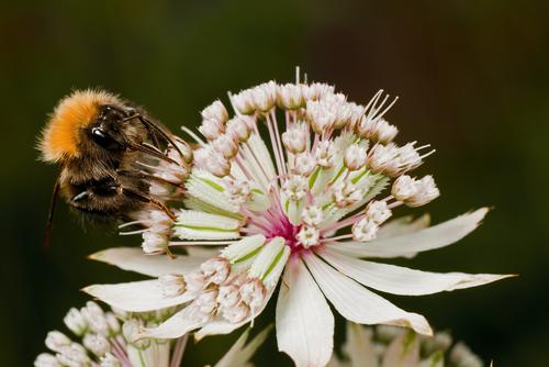 Květy vyhledávají také opylovači.
