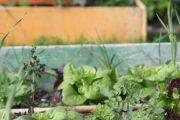 Druhově pestré výsadby jsou stabilnější než monokultury.