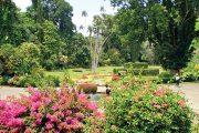 Pohled do botanické zahrady přímo od hlavního vchodu