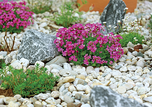 Ve druhé polovině jara kvete naprostá většina skalniček.