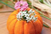 Podzimní dekorace z okrasné dýně a květin