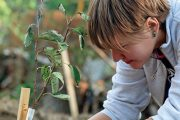 Pokud s pěstováním ovoce začínáte, nespoléhejte se jen na vlastní hlavu.