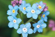 Romantickou atmosféru vytvoří i květiny, které vás oslovily v dětství – konvalinky, pomněnky a sedmikrásky.