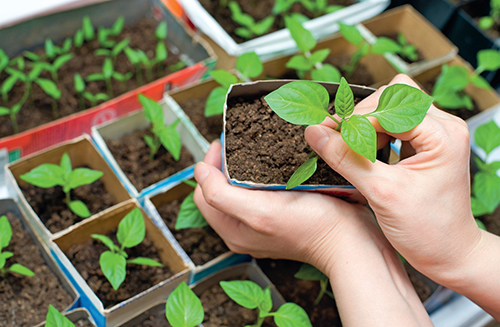 Při výběru zeleniny vždy zvažte všechna pozitiva i negativa.