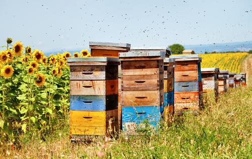 O včelaření mají dnes zájem také mladí lidé.