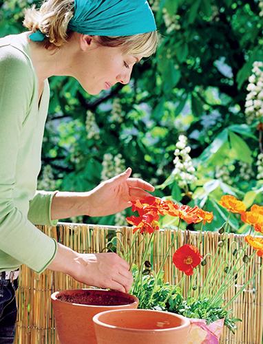 I na přelomu jara a léta můžete osazovat truhlíky.