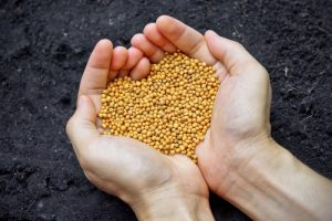 Správný typ hnojiva s vyrovnaným poměrem živin dokáže s rostlinami pravé divy.