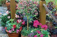 Kromě letniček v truhlících jsou základem krásného balkonu nádobové rostliny označované trefně také jako kbelíkové.