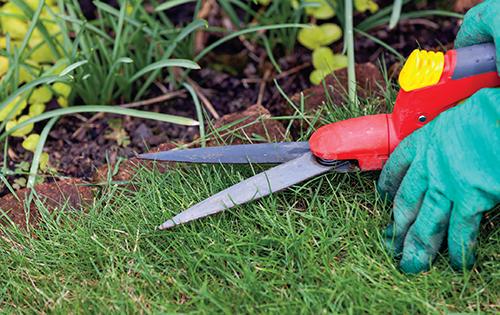 Trávník bývá chloubou každé okrasné zahrady.