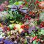 Již v září na zahradě i ve volné přírodě objevíte pestré poklady, které hravě využijete pro svoji tvorbu.