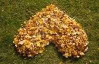 Spadané listí perfektně doplní kompost nebo namulčuje přírodní výsadbu.