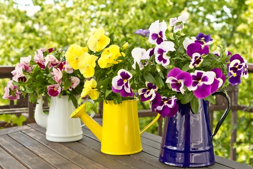 Květy macešek zaujmou také v podzimních dekoracích.