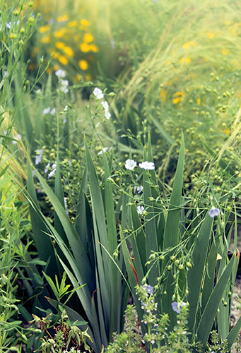 Kombinace bylinek a trvalek byla zvolena tak, aby byla výsadba zajímavá nejen květy, ale také různou strukturou listů v době, kdy rostliny nekvetou.